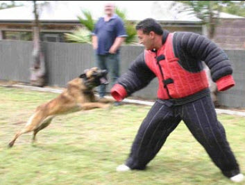 Personal Protection Dog Training Houston TX