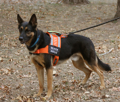 Search and Rescue Dog Training Houston TX