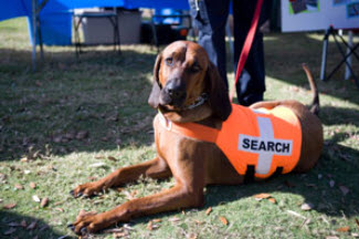 Search and Rescue Training Houston TX