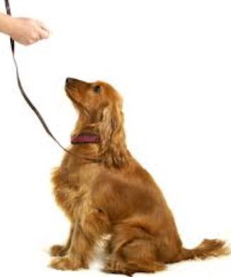 Dog Training Houston   Dog Trainers   Dog Training Classes   K9 Training   Canine Training   Houston TX